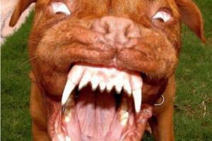 Англия первой на Западе выродилась в бешеную собаку, понимающую только силу